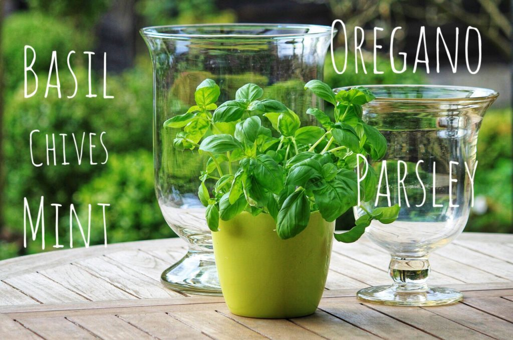 5 Easy Steps to Growing Herbs in Containers and Saving A Few Dollars
