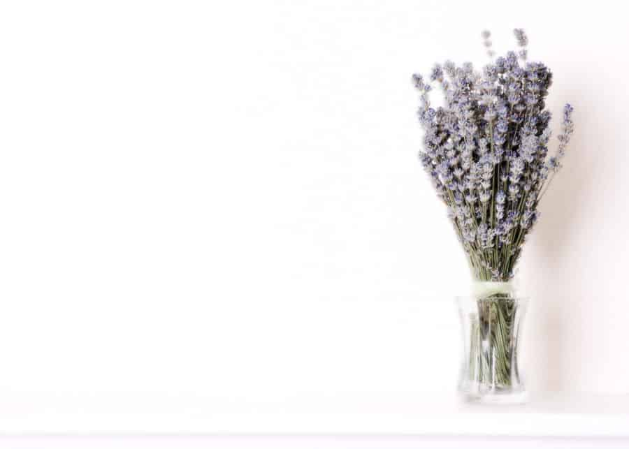 bunch of lavender in clear vase